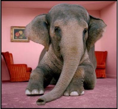elephant-room1