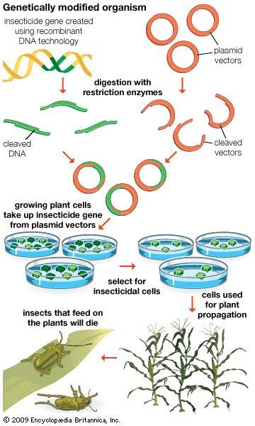 poison-diagram